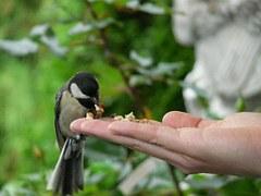 hand feeding 3